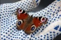 Бабочка в руках / фото: Истома
