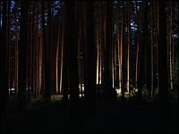 Геокешерский лагерь ночью / фото: ChepSer