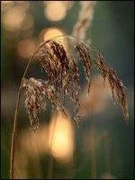 В лучах угасающего солнца / фото: ChepSer