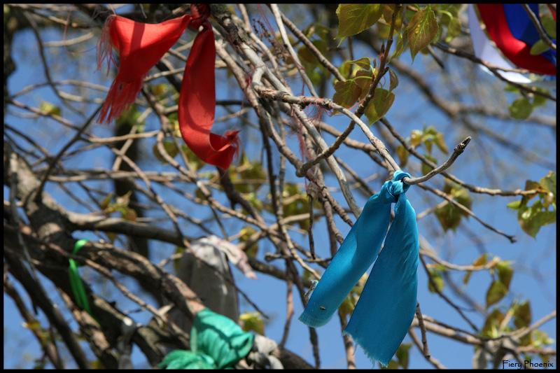 видео зачем привязывают ленточки к деревьям правила были